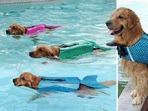 You can now dress your dog up like a mermaid in a glittering life jacket