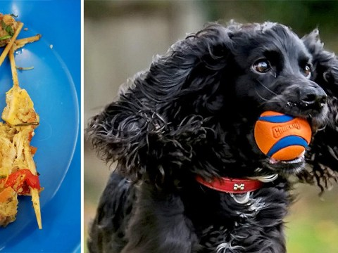 Marmite the dog was saved by vets after swallowing two whole kebabs