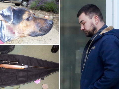 Dog survives being shot in head four times by his owner