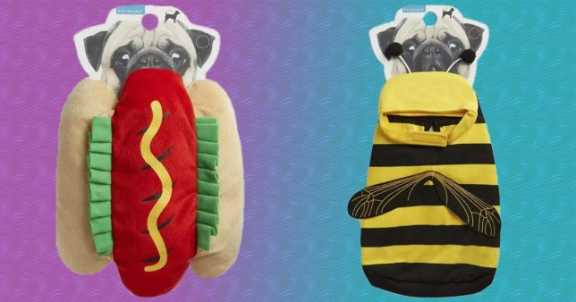 The hotdog and bee outfits from the Primark pet range