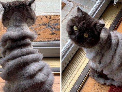 Cat gets ridiculous haircut that leaves him looking 'like an accordion'