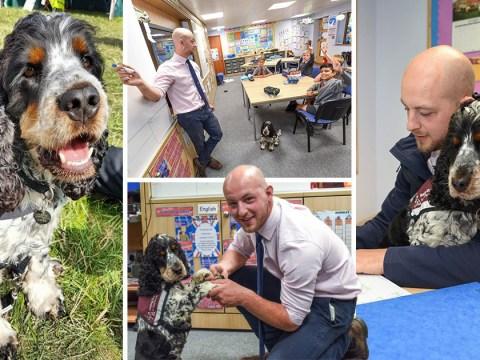 Deaf man becomes teacher after school hires assistant dog