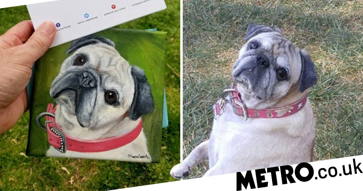 Man asks for refund for food when his dog dies and receives a beautiful tribute