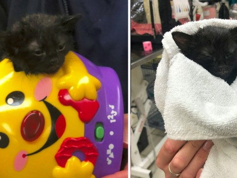 Teeny kitten gets rescued after getting her head stuck in a toy