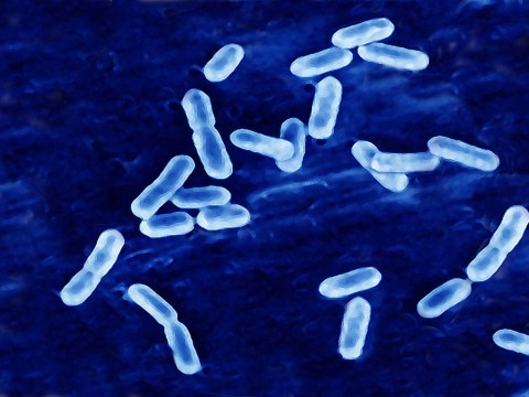 Pensioner, 84, and ex-nurse, 57, named as victims of listeria hospital outbreak