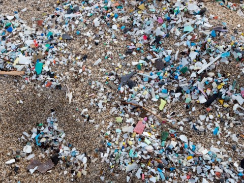 You swallow 100,000 plastic particles every year