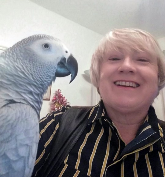 "African grey parrot Lucky Angel (left) with owner Marie Mcaleavey, 51. This video shows African grey parrot Lucky Angel exclaiming his strong political views to the world - including saying ? Trump?s a W*nker? and ?No Brexit?! See SWNS story SWSYparrot. Meet the chatty parrot who had very strong views when he spotted the US president landing in the UK - and shouted ""Trump's a w*nker"" at the TV. Marie Mcaleavey, 51, adopted African grey parrot Lucky Angel two years ago, and he only knew a few names and phrases. But after a few months he found his voice - and wasn't shy about sharing his political views on Trump, Theresa May, the Democrat party and Brexit. He surprised her by first coming out with his views on Trump in November."