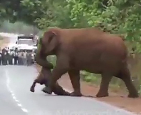 METRO GRAB TWITTER Parveen Kaswan, IFS ??? Verified account @ParveenKaswan Follow Follow @ParveenKaswan More This will move you !! Funeral procession of the weeping elephants carrying dead body of the child elephant. The family just don???t want to leave the baby. https://twitter.com/ParveenKaswan/status/1136932777155108865