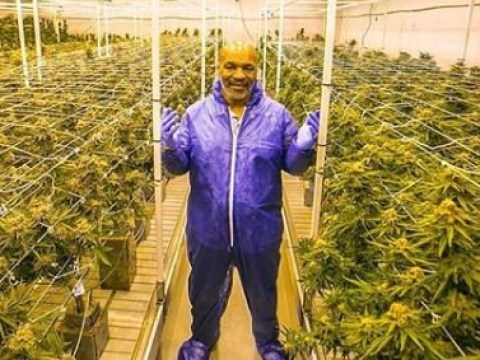 Inside Mike Tyson's 400-acre cannabis resort and it looks insane