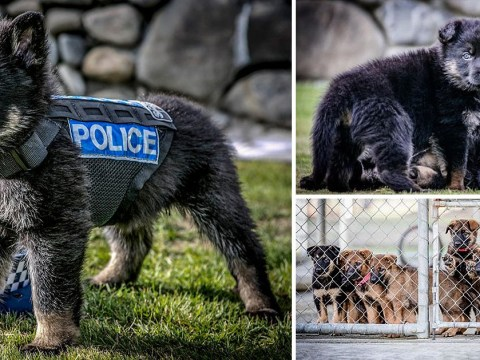 Police told to stop posting so many cute puppy pics and get back to work