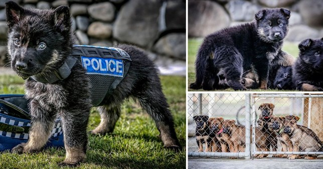 Less Puppies more work - NZ police told to stop postingPicture: New Zealand PoliceMETROGRAB