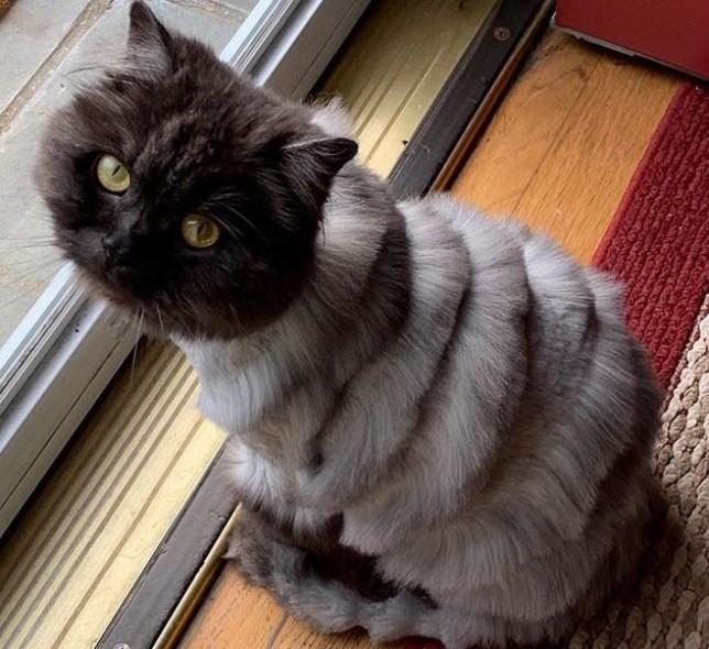 METROGRAB - Accordion cat From @ollietheslinkycat/Instagram https://www.instagram.com/p/Byi2YXTHnL6/