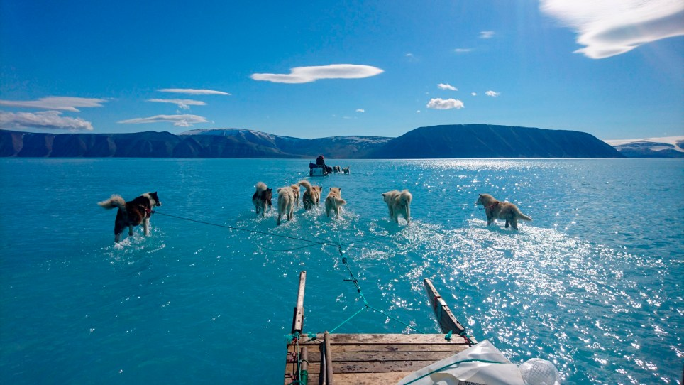 In this photo taken on Thursday, June 13, 2019 sled dogs make their way in northwest Greenland with their paws in melted ice water. Diplomats and climate experts gathered Monday in Germany for U.N.-hosted talks on climate change amid growing public pressure for governments to act faster against global warming. Over the weekend, a picture taken by Danish climate researchers showing sled dogs on the ice in northwest Greenland with their paws in melted ice water was widely shared on social media. Greenland???s ice melting season normally runs from June to August but the Danish Meteorological Institute said this year's melting started on April 30, the second-earliest time on record going back to 1980. (Danmarks Meteorologiske Institut/Steffen M. Olsen via AP)