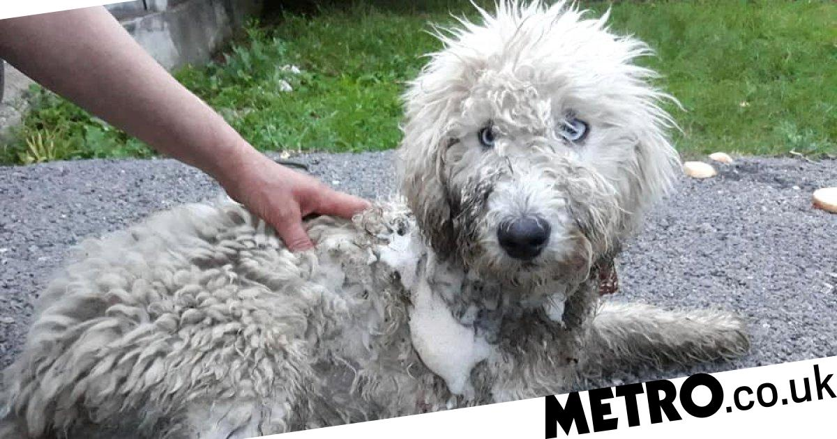 Dog eaten alive by maggots after leg is chopped off and left for dead