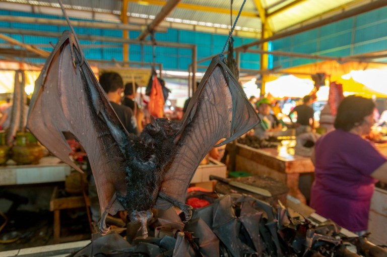 Pictured: Flying foxes (bats) for sale at the market. The market from hell? A food market shows off rows upon rows of dead animals, some of which have been beaten to death. Dogs and chickens can be seen lined up with their mouths hanging wide open. Shoppers even pick up some of the dogs and bats as they look for the best on the market. Retired biologist and amateur photographer Alf Jacob Nilsen took the shocking pictures of the market during a visit to Tomohon Village in Northern Sulawei, Indonesia. SEE OUR COPY FOR DETAILS. Please byline: Alf Jacob Nilsen/Solent News ? Alf Jacob Nilsen/Solent News & Photo Agency UK +44 (0) 2380 458800