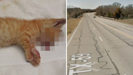 This kitten was one of at least two killed after being hurled from a pickup truck driving at 70mph on the US Highway 59 into Bowie, Texas, on Saturday