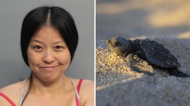 Yaqun Lu is accused of prodding a nest of baby sea turtle eggs with a stick, before stomping all over it with her bare feet