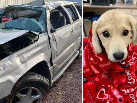 Rescue puppy survived 13 days in the wilderness after she vanished following car crash