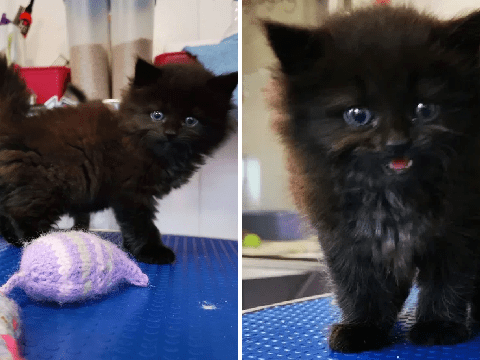 Tiny kitten miraculously survives being driven over by tractor and plough