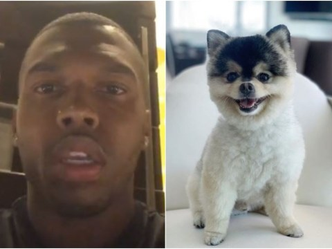 Daniel Sturridge issues £30,000 reward after his dog is stolen from his Los Angeles home