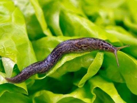 Hacks to deal with slugs, snails and insects in the garden in a humane way