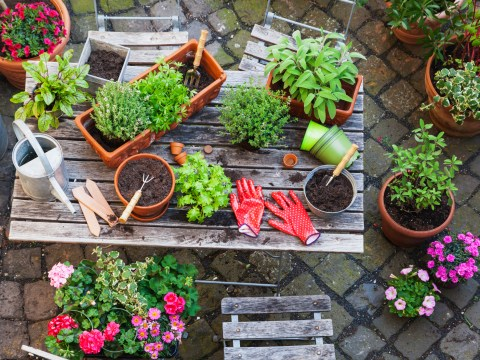 What to plant in your garden if you're a renter