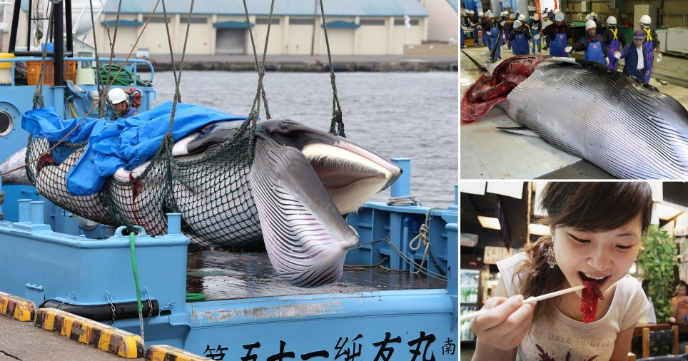Japan began commercial whale hunting today for the first time in 30 years
