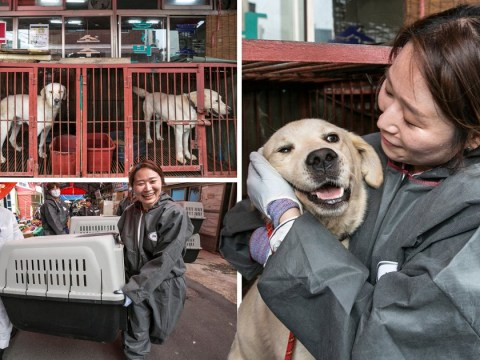 Rescuers save 85 dogs from slaughter as meat market forced to close