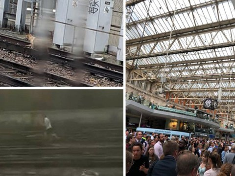 Waterloo Dog who caused chaos for commuters is found safe and well