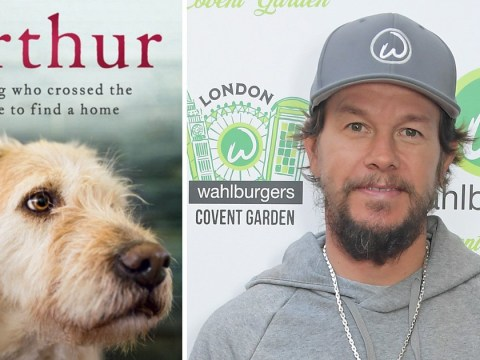 Mark Wahlberg has been cast in stray dog story Arthur The King and we're already emotional