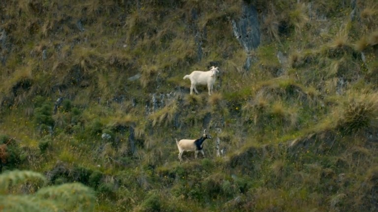 The goat Gordon Ramsay killed