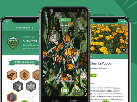 There's now a Shazam for plants and animals