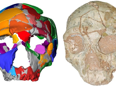 Fossilised skulls show scientists were way off base with their predictions