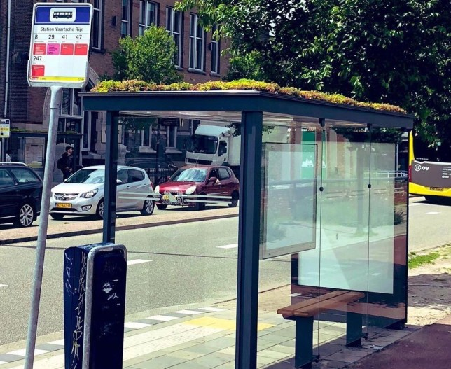Dutch city turns 316 bus stops into 'bee stops' to help bees thrive