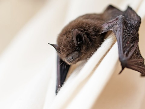Boy, 2, given rabies jab after being bitten by bat while he was asleep