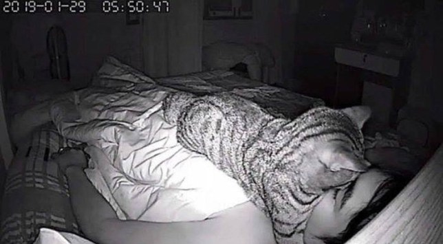 Man finds out that his breathing problems while sleeping are thanks to his cat sitting on his face