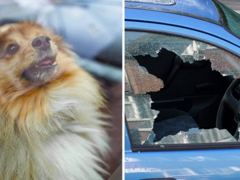Can you legally smash someone's windows to rescue a dog from a hot car?