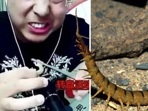 Video blogger dies while live-streaming himself eating centipedes and geckos