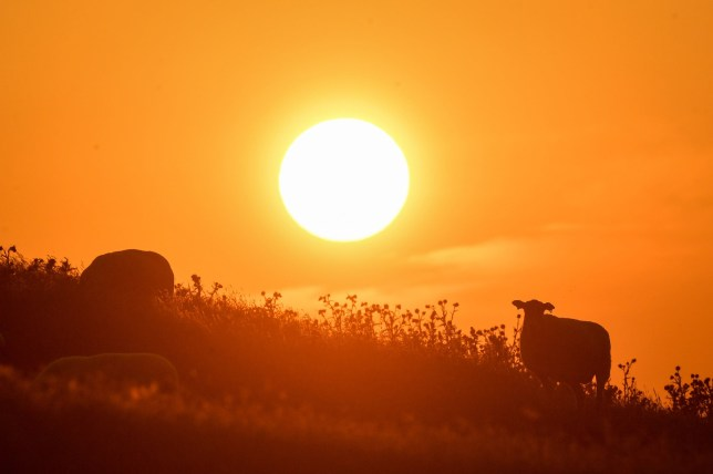 The sun rises over Burton Dassett Hills in Southam, Warwickshire. The UK could encounter the hottest July day on record later this afternoon. PRESS ASSOCIATION Photo. Picture date: Thursday July 25, 2019. See PA story WEATHER Hot. Photo credit should read: Jacob King/PA Wire