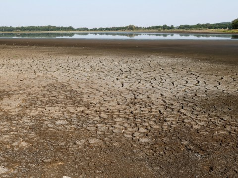 Hundreds of fish saved as lake dries up in heatwave