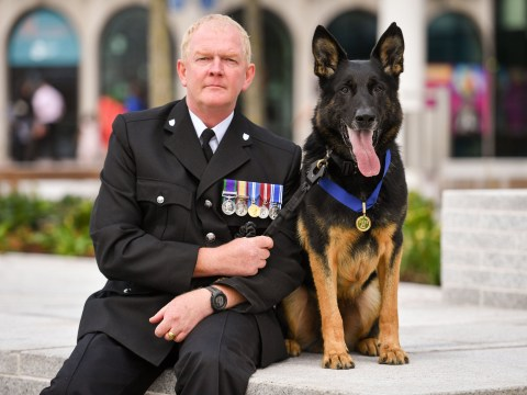 Police dog who was repeatedly stabbed while detaining man is given bravery award