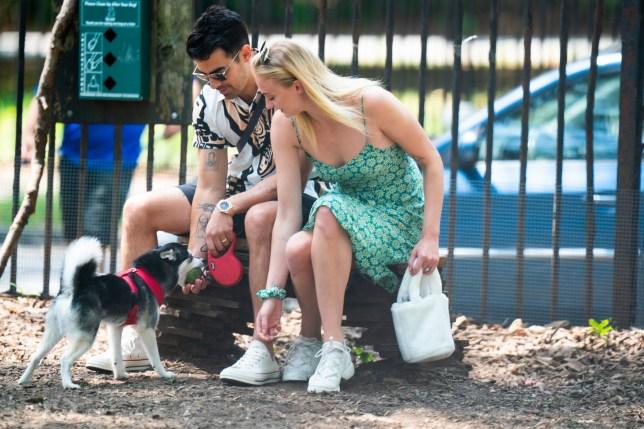 Joe Jonas and Sophie Turner take their dog Porky to the dog park
