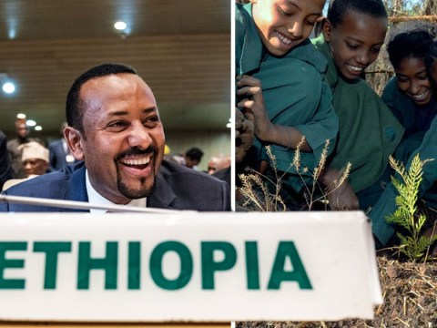 Ethiopia 'breaks record' by planting 350,000,000 trees in a day to fight climate change