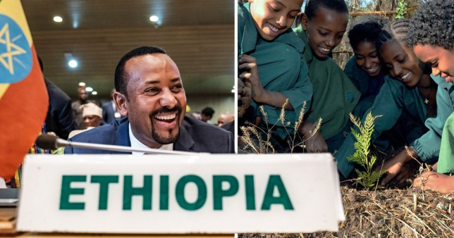 Ethiopia 'breaks record' by planting 350,000,000 trees in one day