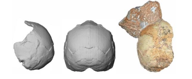 The Apidima 1 skull appears to have belonged to a modern human (Image: Universities of Tübingen )