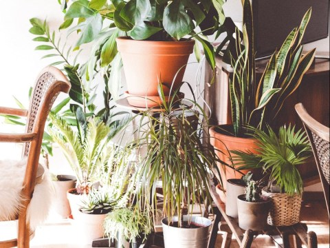 How to keep house plants alive during a hot weather