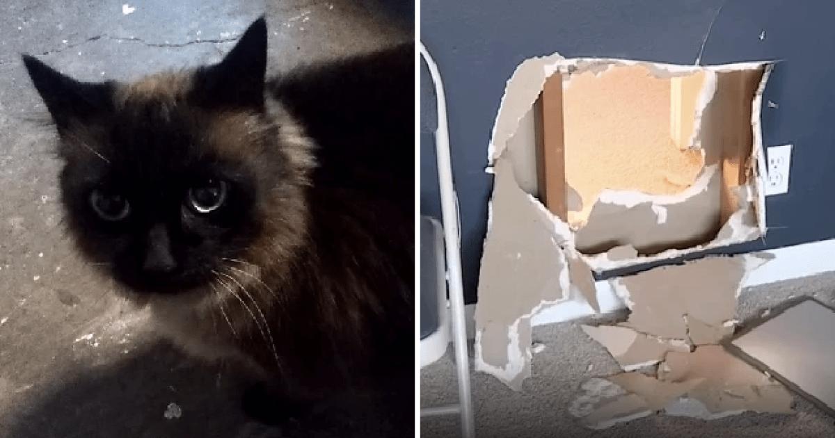 Police catch actual cat burglar called Spaghetti helping to raid ...