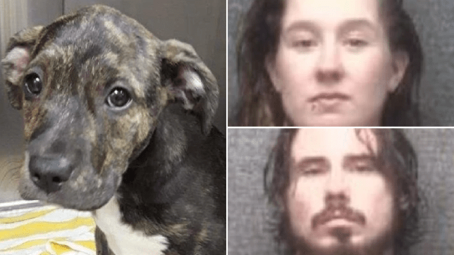 Couple 'kicked tiny puppy into pool then stood and watched as she began to drown'