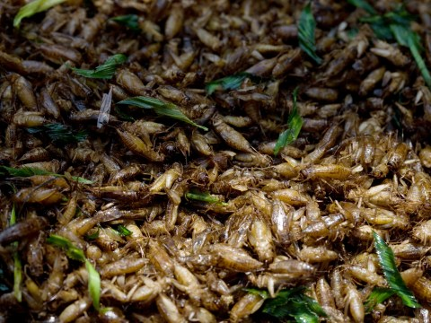 Edible insects could offer more antioxidants than orange juice