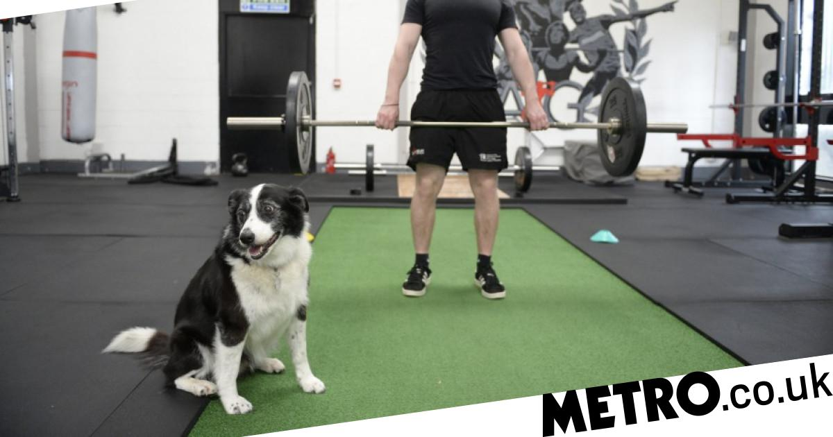 Glasgow gym AG Fitness Training lets you work out with your dog